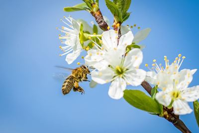 Bees and Covid 19